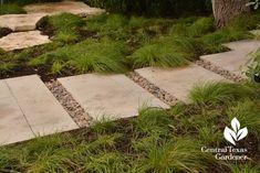 berkeley sedge pavers Central Texas Gardener