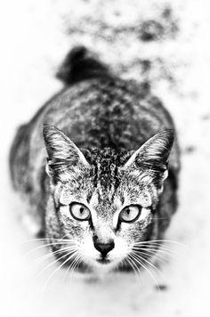 Cat, by Thirukumaran Murugaya