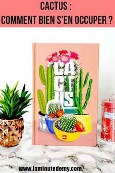 Cactus : comment bien s'en occuper ? Minute, Green Life, Coin, Blogging, France, Lifestyle, Deco, Happy, Orchid Cactus