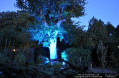Outdoor lighting hire for weddings, parties and events. We design and supply coordinated lighting schemes for use both indoors and outdoors. Tree Lighting, Outdoor Lighting, After Dark, Professional Photographer, Outdoor Spaces, Lights, Random, Blue, Design