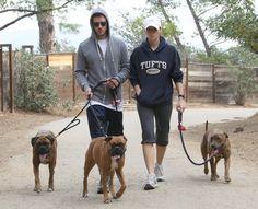 Justin Timberlake y Jessica Biel con Bearlie, Bella y Tina