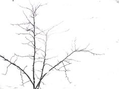 Modified Photo:  The tree branches