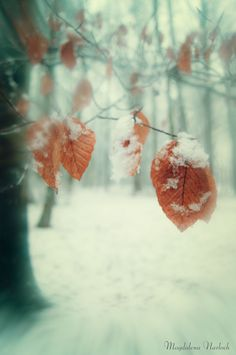 The Last Leaves by Magdalena Narloch