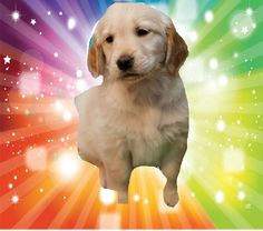dog and puppy pics   puppy - Dogs Photo (32659454) - Fanpop fanclubs