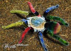 Spider (1024x2000)
