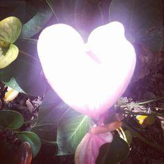 ❤ Buenas Noches 🌌https://www.instagram.com/p/BM-obU5jxYc/