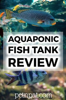 The best aquaponics fish tank for growing your own plants while keeping your fish tank nice and clean. Eco tanks make great homes for your pets. The top thing you need to know is. Aquarium Fish Tank, Aquarium Stand, Aquarium Ideas, Aquarium Design, Animals For Kids, Animals And Pets, Baby Animals, Funny Animals, Fish Tank Themes
