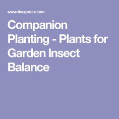 Companion Planting - Plants for Garden Insect Balance