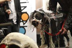 #WINTERWOOFSTOCK » #HighTea Event High Tea, Pup, Horses, Fish, Winter, Dogs, Animals, Animais, Animales