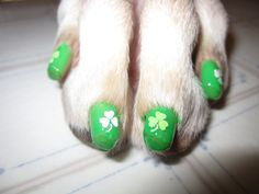 St Patricks day dog nails - I would never do this but someone would! and they are pretty funny!