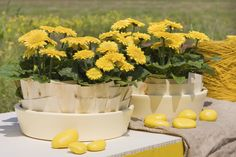 Sundayz® outdoor gerbera yellow