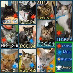 These cats, ranging in age from 1 to 20 years (the oldest being the Burmese, PCC 121), need a rescue or adoption ASAP. If you are a rescue or know a rescue that can help, please contact Hawkesbury Pound, NSW on (02) 4560 4644 (if no answer, leave a message) or email companionanimal@hawkesbury.nsw.gov.au