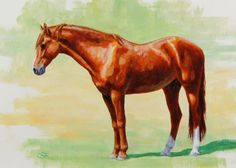 ORIGINAL Oil painting for sale - Chestnut-Morgan-Horse