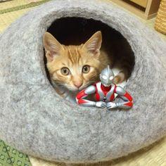 ウルトラマン 猫