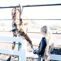Malibu Wine Safari Malibu Wine Safari, Malibu Wines, Wine Gift Baskets, Wine Wall, Baby Animals, Giraffe, Places To Go, Horses, Instagram Posts