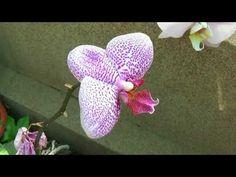 Orhidee în Botanică