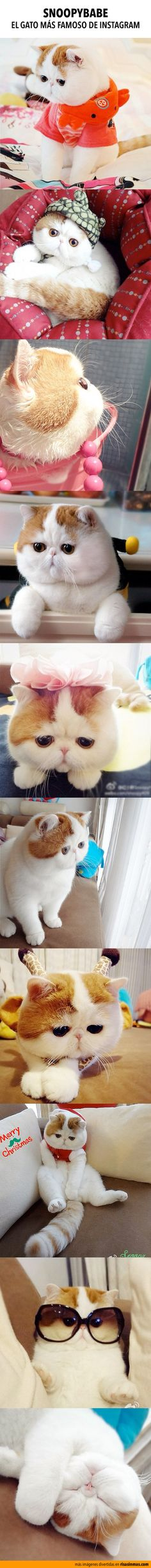 Snoopybabe, el gato más famoso de Instagram
