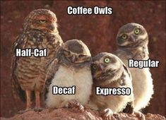 Coffee Owls!!