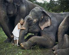 elephants and a brave kid
