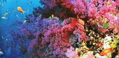 THE MOST COLORFUL PLACES ON EARTH great barrier reef, Australia