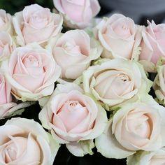 Kauniit valmistujaisruusut FLÖR Peltolasta ja FLÖR Skanssista. 🌹  #ruusu #ruusut #rose #flör #flör2017 #florkukkajapuutarha  #kukkajapuutarhaflör #kukka #puutarha #turku #love_turku #kissmyturku #flowerstagram #flowerinspo #kukkakauppa #natureinspires #natureinspired