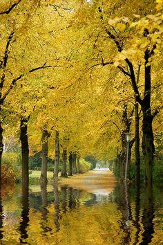 Golden Reflections...dirk paessler