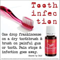 Cute Pet: Young Living Frankincense Essential Oil for Tooth Infection. Yl Oils, Frankincense Essential Oil, Doterra Oils, Doterra Essential Oils, Natural Essential Oils, Essential Oil Blends, Natural Oils, Natural Health, Young Living Oils