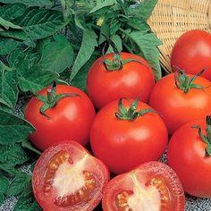 Khasiat dan Manfaat Tomat bagi kesehatan dan kecantikan.