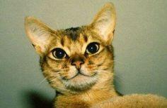 #pretty #cat