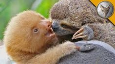 「sloth」の画像検索結果