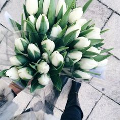 Picked up some white #tulips for the weekend #kristjaanablossoms