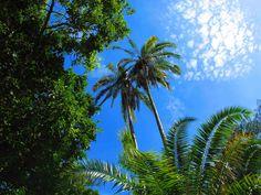 Erlebnisreiche Fußsafari im Norden Tansanias Black History, Island, Plant Leaves, Plants, National Forest, Bowties, Environment, Africa, Vacation