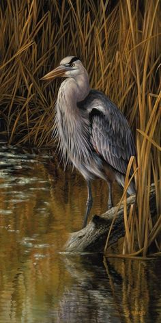 """""""Blue Heron"""" - Rosemary Millette - these live by me in sycamore/DeKalb"""