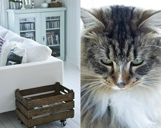 love the crate on wheels..and the cat.