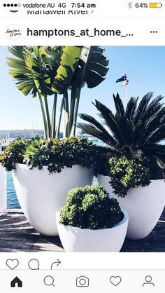 various sized pots and plants at different heights