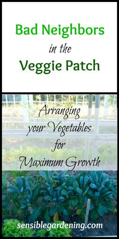 Bad Neighbors in the Veggie Patch with Sensible Gardening. Proper placement of your vegetables in your garden for best growth results.