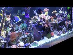 Rainbow SPS Reef Tank Crosshatch Triggers