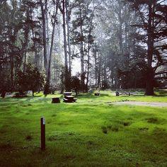 Caliparks : Henry Cowell Redwoods State Park Santa Cruz Mountains, Local Parks, Park Photos, Oregon Coast, Park City, Regional, State Parks, Travel Ideas, Gratitude