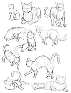 Model sheet pencil sketches of how to draw a cat.