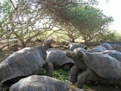 Galapagos Islands with Kids Travel With Kids, Family Travel, Family Adventure Holidays, Travel Stroller, Galapagos Islands, Tortoises, Archipelago, Ecuador, South America