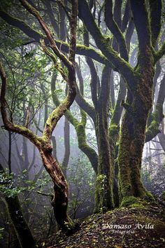 sublim-ature:      Anaga, Canary Islands (Spain)     Damaso Avila