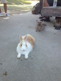 Awesomeness of Rabbit Island in Japan