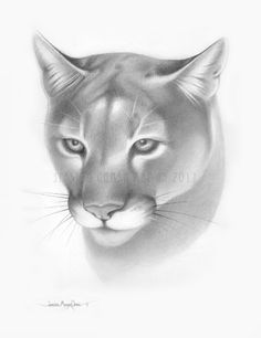 Cougar Face Tattoos