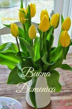 Super healthy foods to eat everyday life lyrics Tulip Seeds, Flower Seeds, Mini Bonsai, Rare Orchids, Bonsai Seeds, Tulip Bulbs, Rose Trees, Herb Seeds, Orchid Plants