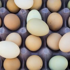 What color is your carton lacking? Green blue chocolate brown? Who knew eggs would end up being art? #fresheggsdaily #farmtotable #eggs #homestead