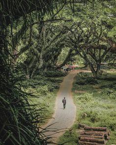 Djawatan forests,Benculuk,Banyuwangi