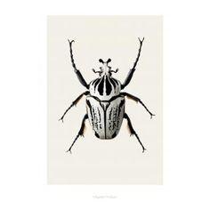 Poster Bug B8 | Hagedornhagen | designlemonade.com