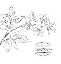 Calligraphy cherry blossom vector by Kotkoa on VectorStock®