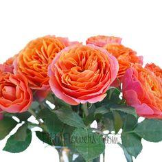 FiftyFlowers.com - Bright Coral Orange Spray Garden Roses