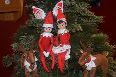 The Elf on the Shelf - Sitting in the Christmas tree, and they brought some elf tins